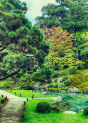 japan kyoto hdr garden trees amazing