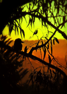 nature digital painting kookaburra bird australia sunset photoart silhouette