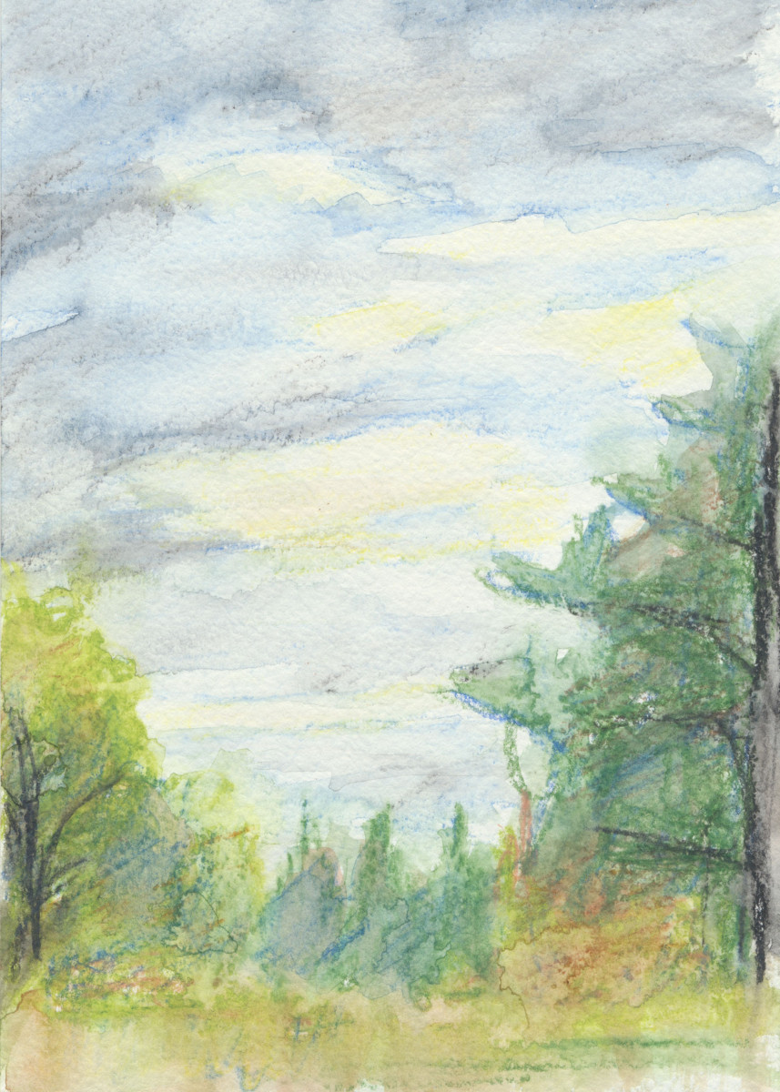 Pine forest. The island on the Volga River. Travel sketch.