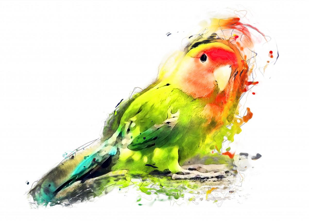 Lovebird 134302