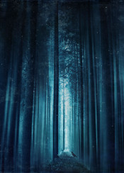motion blur blue mystical forest perspective bird trees path