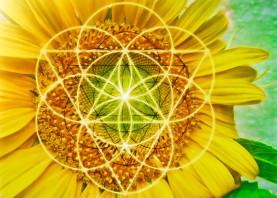 sunflower geometry energy flower nature meditation