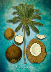 cocos nucifera tree palm botanical botanic floral illustration decor art