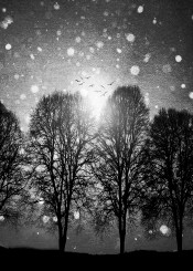 landscape trees winter blackandwhite snow