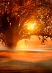 landscape nature tree sun