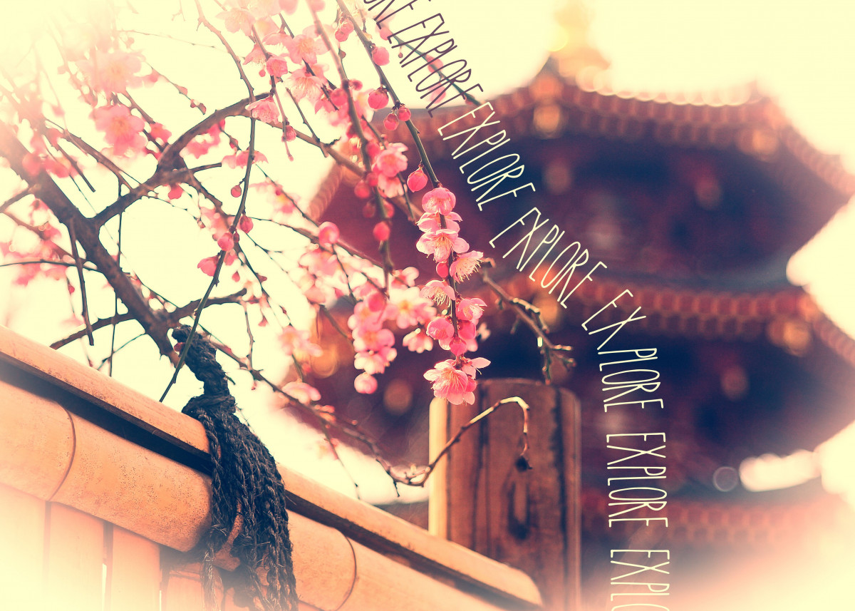 Explore Plum Blossoms Pagoda Bamboo Fence - A lovely Spring scene at a