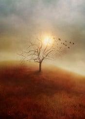 landscape nature tree sunset love birds