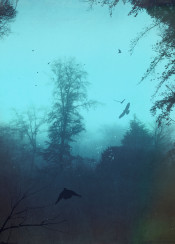 blue mood outdoor hazy atmosphere birds silhouettes textures trees forest fall spooky misty