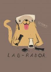 animals dogs cute funny labrador