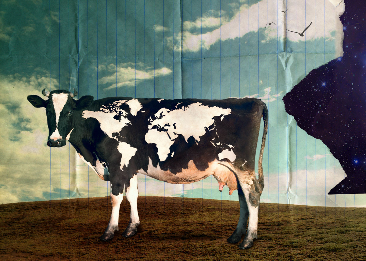 Surreal Bovine Atlas. Cow with world map