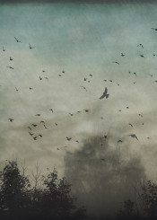 birds dreamy fog outdoors animals pastel silhouettes atmosphere misty trees sky landscape