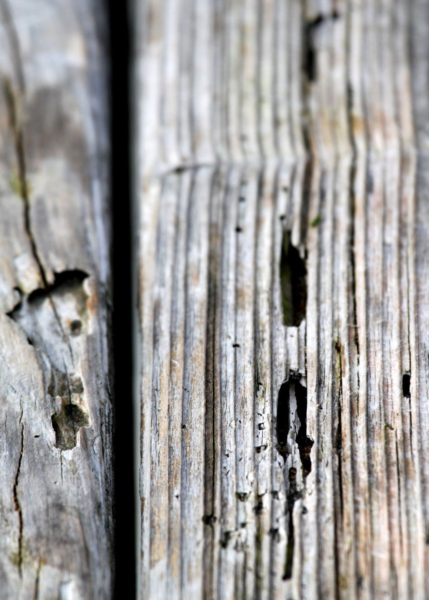Old Wood Texture Texture of old wood with many termites holes.