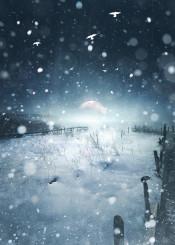 winter snow dark moody mood snowing cold darkness pier landscape nature december birds fog haze mist artwork photo wild