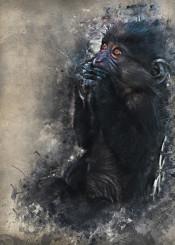 gorilla animals animal gorillas monkey wild