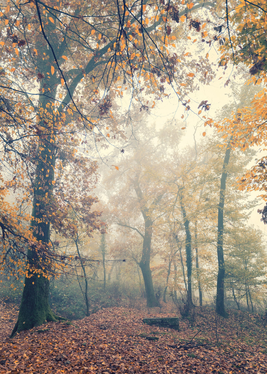 Foggy wood in Northern Italian autumn