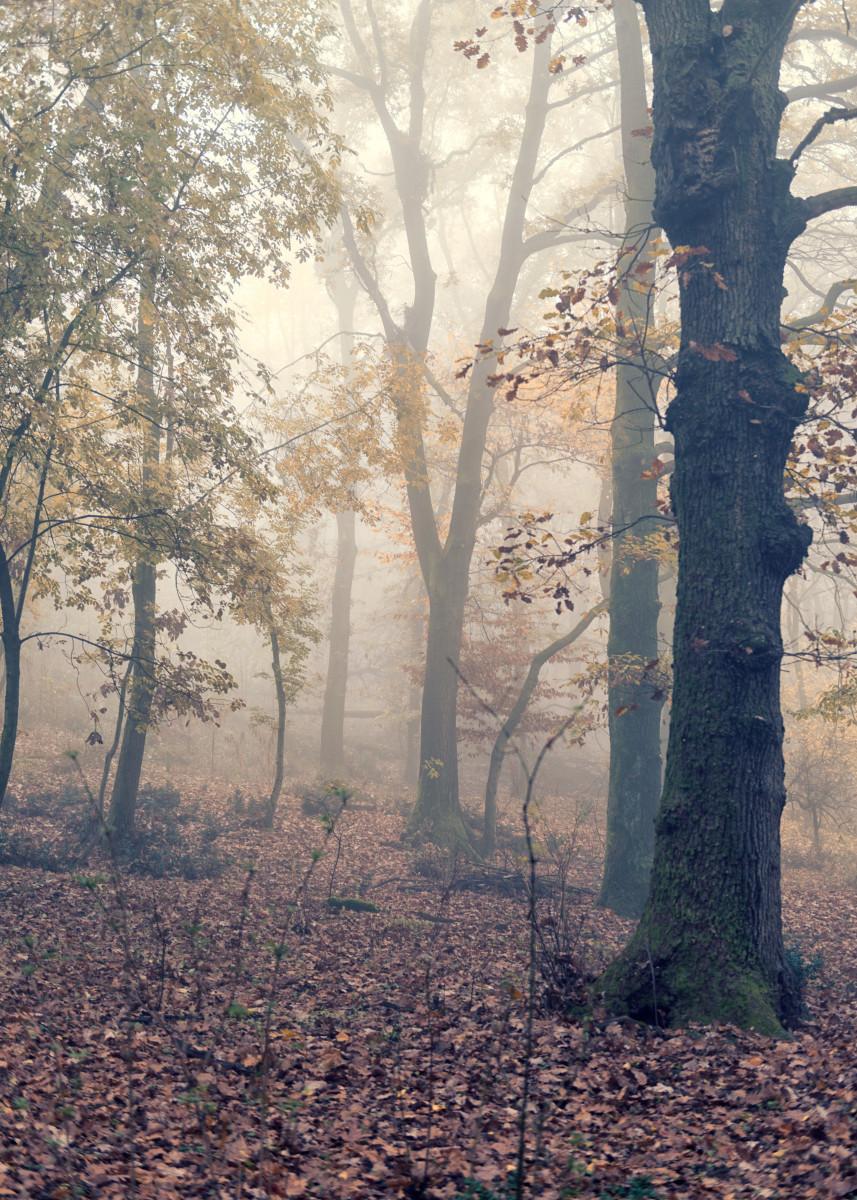 Foggy wood in Northern Italian autumn