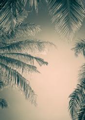 palm leaf frame grey nature tree coconut