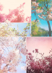 dreamy spring floral collage pink white cherry lake happy lovely seasonal flowers sakura blossoms tree flowering branches blue sky gorgeous paper textures geometric pattern painterly brushstrokes film filters vintage fresh beauties petals blooms blooming nature natural japan japanese nihon nippon beautiful feminine cheerful delicate sweet
