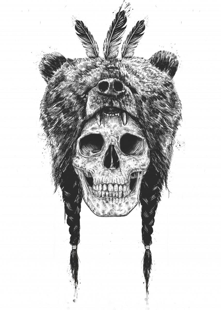 Bear Skull Drawing Bear Skull Draw...