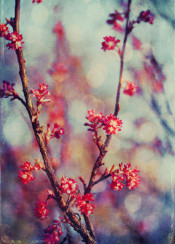 spring textures red bokeh colors blossoms nature vintage delicate twig vivid painterly impressionistic