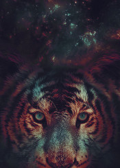 tiger cool fun cute cat cats blue orange colorful colors funny nature galaxy space stars