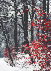 leaves red white snow winter texture outdoor season cold dreamy trees mood atmosphere forest
