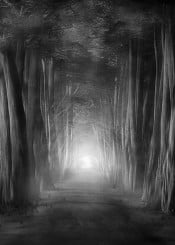 landscape nature forest blackandwhite