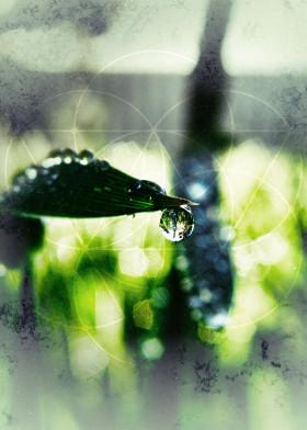 geometry nature drops liquid reflection bokeh macro graphic art green sacred