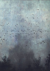 fog mood birds outdoor silhouettes textures atmosphere fall powerline trees mystery