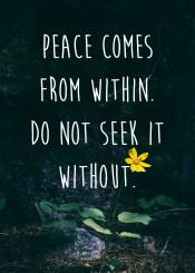 quotes wisdom nature buddha
