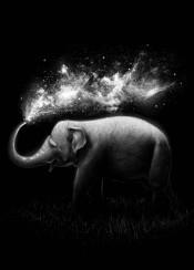elephant splash space stars