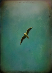 color photograph photography photo vintage retro bird birds seagull seagulls fly flying flight nature natural free freedom sky clouds emulsion texture textures peace love passion evoke nostalgic nostalgia enjoy metal poster victoria herrera victoriaherrera victoriaherrera travel migrate emigrate world animals