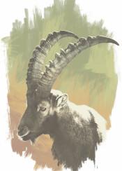 animals animal unique design paint illustration art digital thorns unbend cool