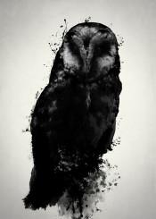 owl bird animal prey spatter digital illustration manipulation photography mythology dark