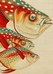 digital fish colors animals ocean