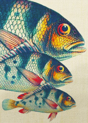 animals fish colors ocean nature