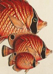 fish animal colors ocean nature