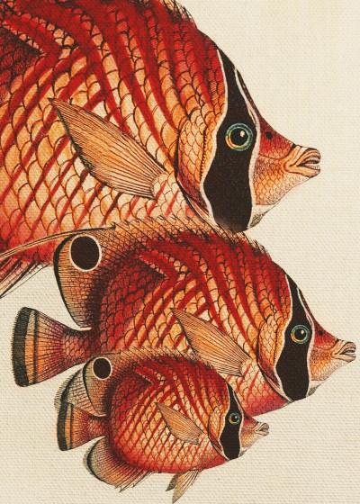 Fernando Vieira Classics Fish   Displate Prints on Steel
