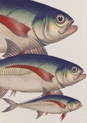 animals fish ocean colors