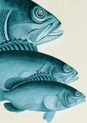 digital fish animals colors ocean