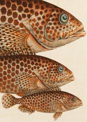 animal fish colors ocean