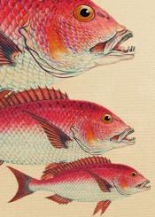 animals colors fish ocean