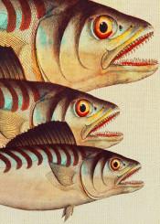 digital colors animals fish ocean
