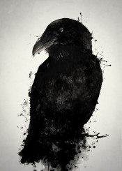 raven crow bird animal prey wildlife nature outdoors mythology norse pagan viking photomanipulation spatter ink oden odin hugin munin huginn muninn