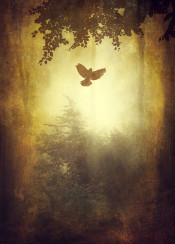 surreal mist fog light trees mystical frame texture yellow glow bird silhouettes vintage moody atmosphere