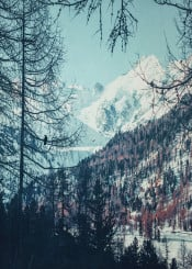 forest winter alps trees textures valley snow sun bird