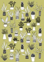 cacti cactus houseplant plant interior nicsquirrell nature organic pattern green black white drawing succulent art design illustration