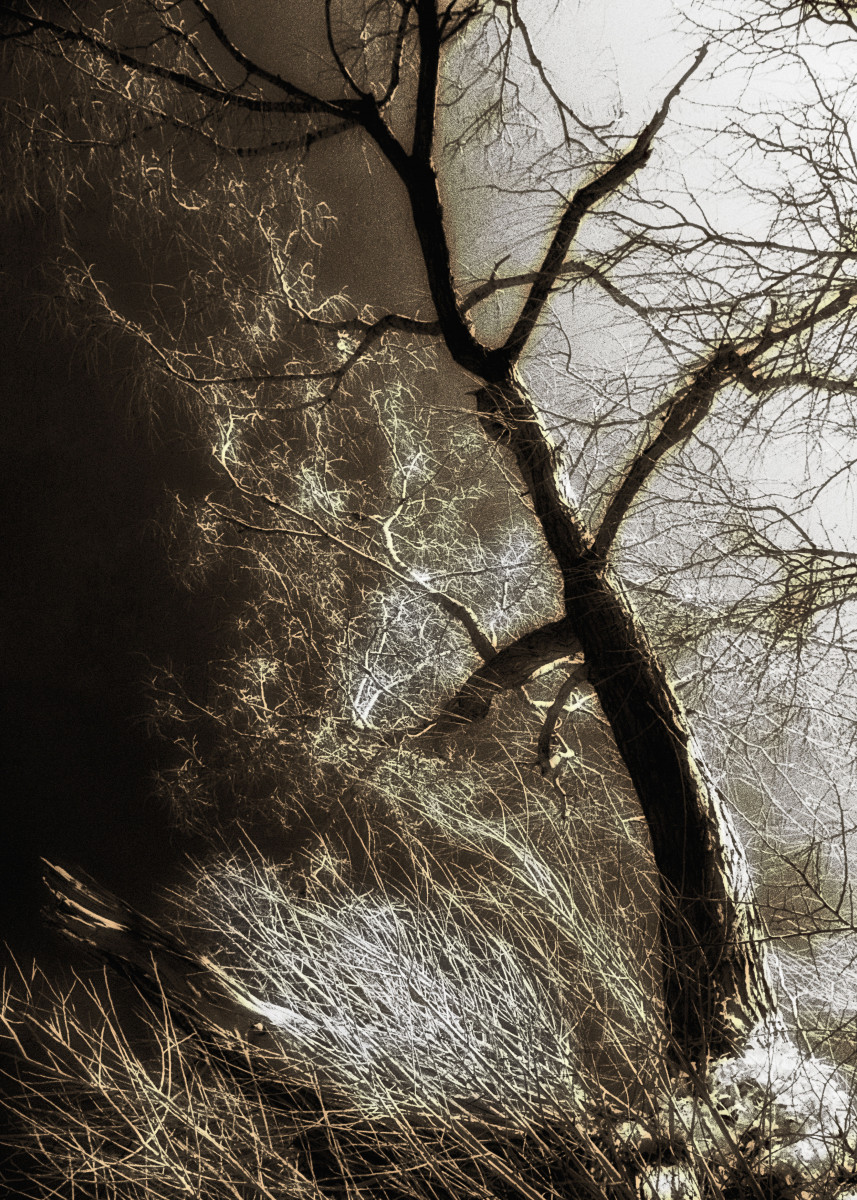 Beyond The Eyes. A tree photographed by Infra Red light - invisible to 179412
