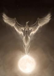 phoenix fenix bird moon moonlight night