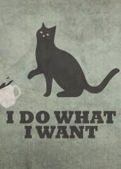 cat humor feline cathumor